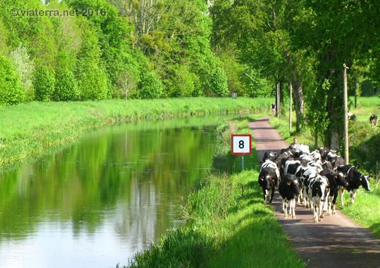 canal nantes brest vaches