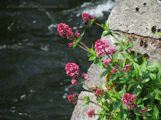 flowers galway river
